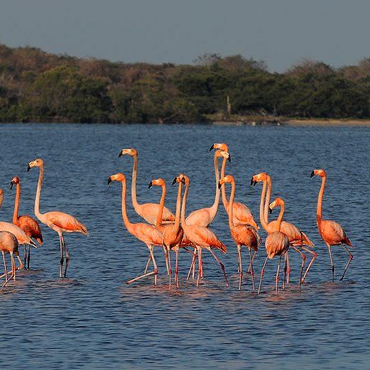 Flamencos_Parques_Nacionales_Naturales_de_Colombia