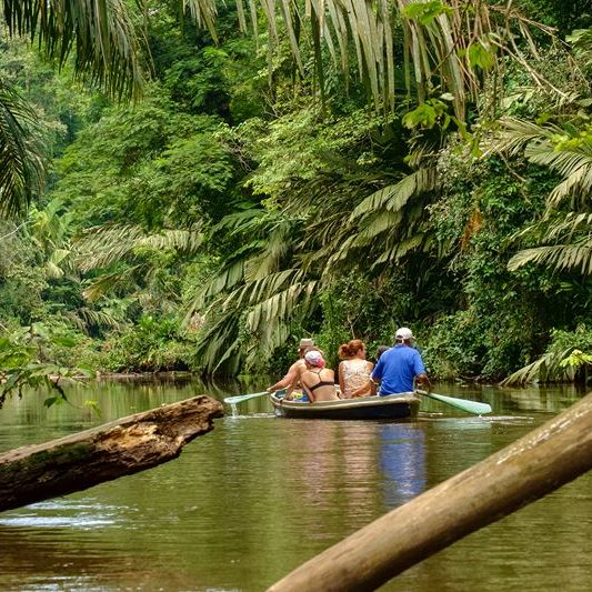 rainforestfoto